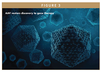AAV vectors discovery to gene therapy