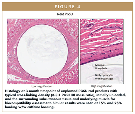 Histology at 3-month timepoint of explanted PGSU rod products with typical cross-linking density (3.5:1 PGS:HDI mass ratio), initially unloaded, and the surrounding subcutaneous tissue and underlying muscle for biocompatibility assessment. Similar results were seen at 15% and 25% loading w/w caffeine loading.