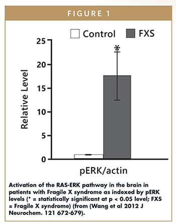 Activation of the RAS-ERK pathway in the brain in patients with Fragile X syndrome as indexed by pERK levels (* = statistically significant at p < 0.05 level; FXS = Fragile X syndrome) (from (Wang et al 2012 J Neurochem. 121 672-679).
