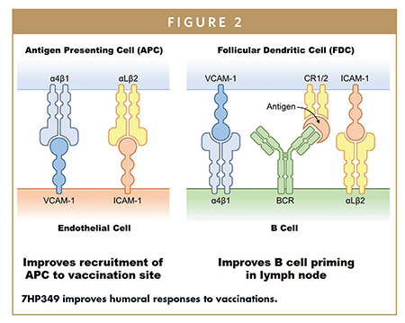 7HP349 improves humoral responses to vaccinations.