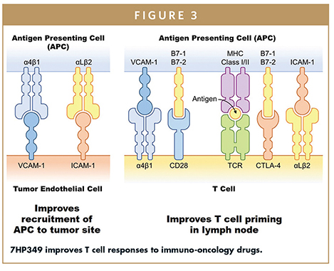7HP349 improves T cell responses to immuno-oncology drugs.